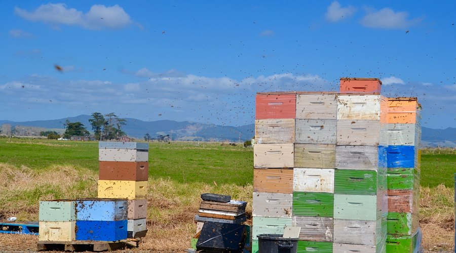 Kai Ora Honey hives, Te Taitokerau. Photographer: Chevon Horsford